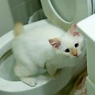 Ragdoll Kitten using the toilet by DariaGrippo