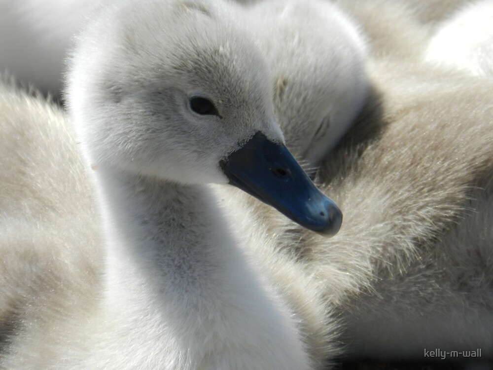 I once was an Ugly Duckling by kelly-m-wall