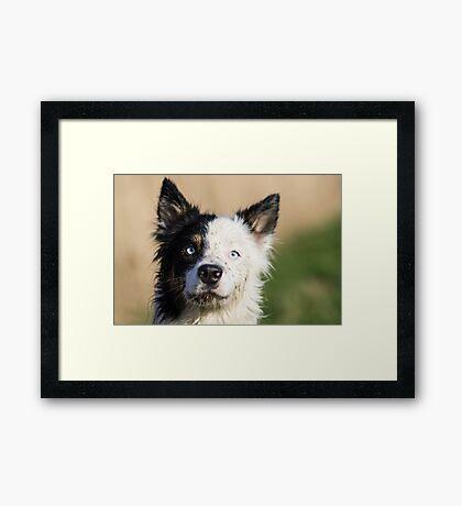 Harrie Framed Print
