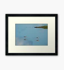 Black Necked Stilts - MINWR Framed Print