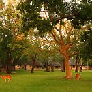 Loving Letaba by Explorations Africa Dan MacKenzie