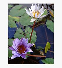 Water Flowers - Flores Del Agua Photographic Print