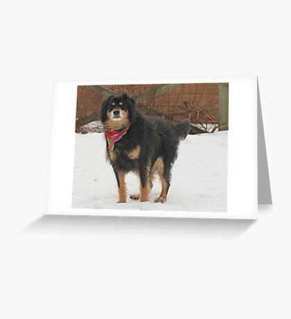 Mssr. Helmoots Favorite Scarf Greeting Card
