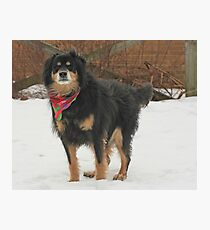 Mssr. Helmoots Favorite Scarf Photographic Print