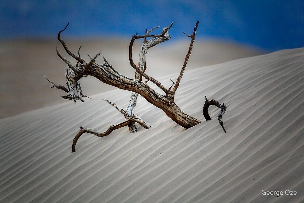 Desert Tree by George Oze