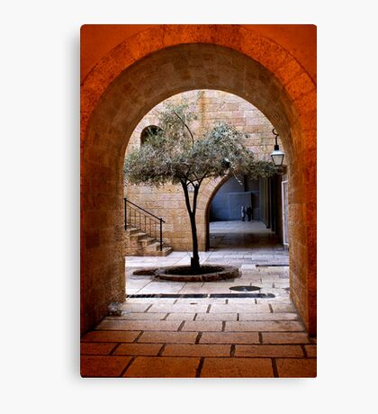 An Olive Tree Grows In Jerusalem Canvas Print