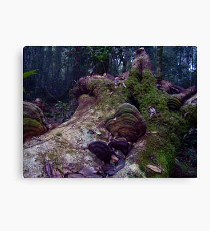 Conks or Not Canvas Print
