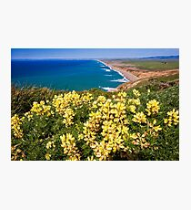 Shoreline with Yellow Wildflowers Photographic Print