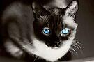 Stoney Blue by KBritt