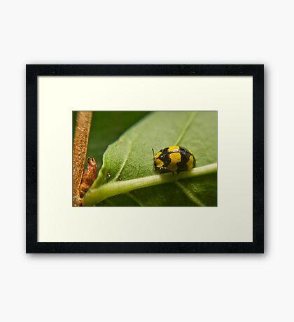Ladybird, Ladybird Fly Away Framed Print