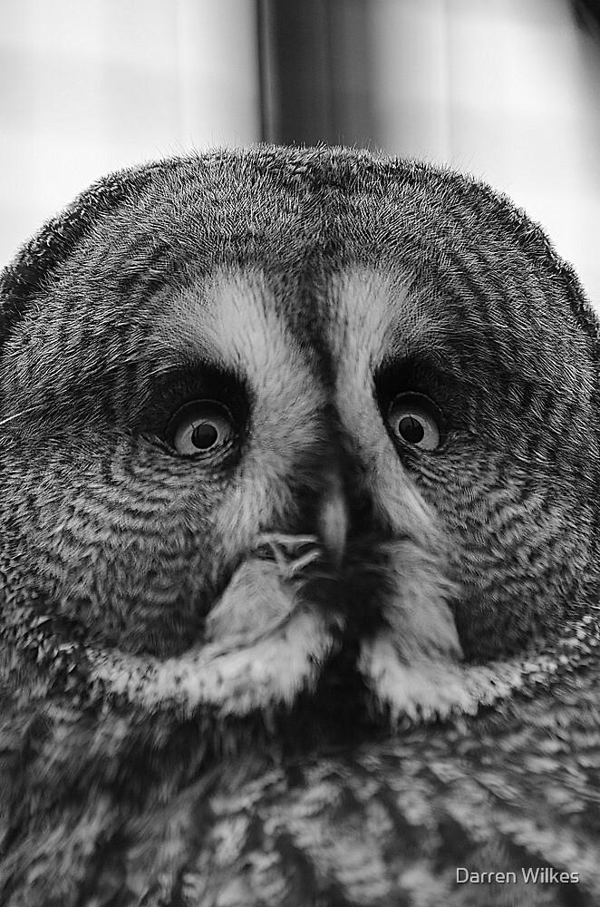 The Great Grey Owl by Darren Wilkes