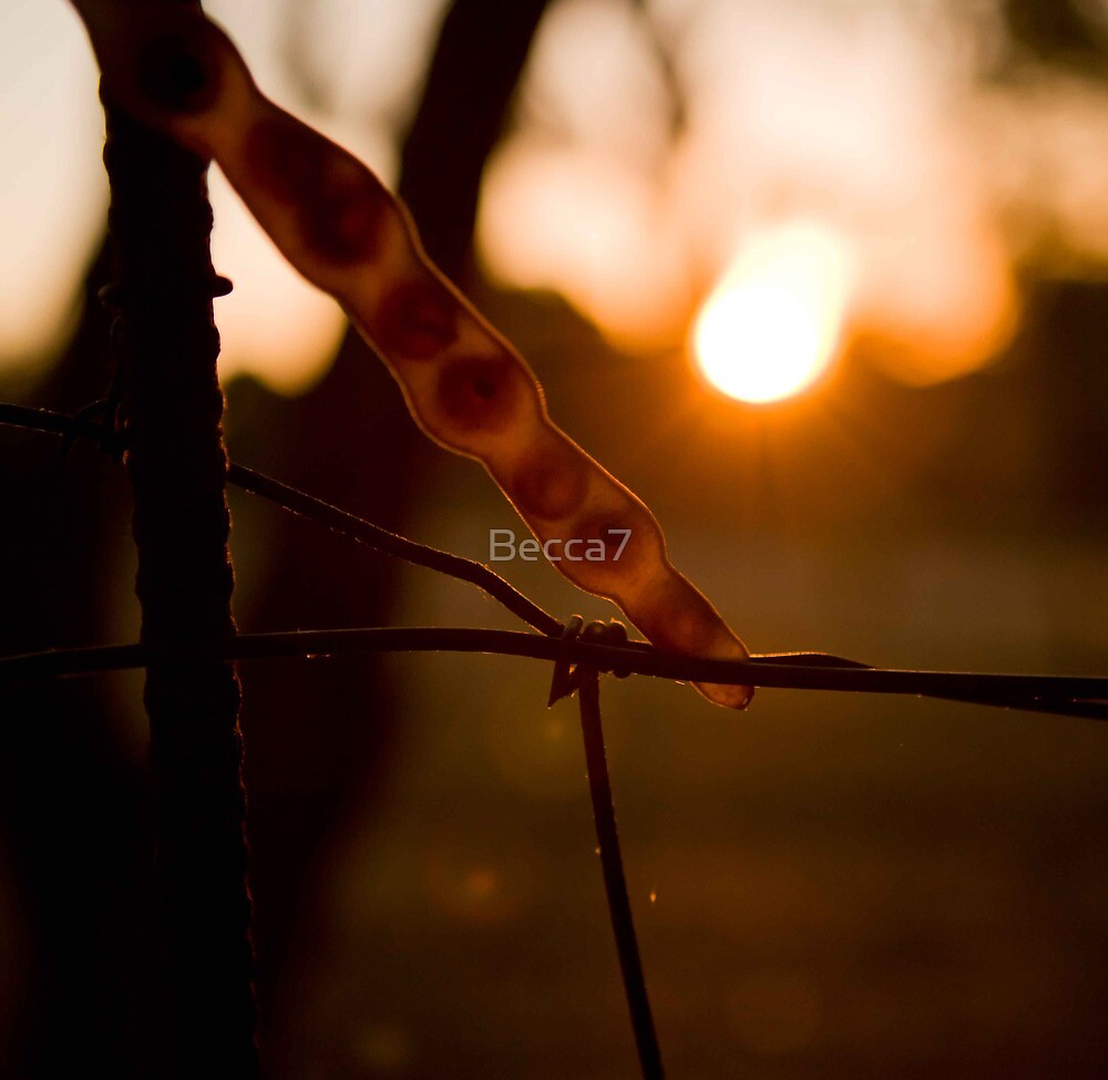 seed caught in the wire by Becca7