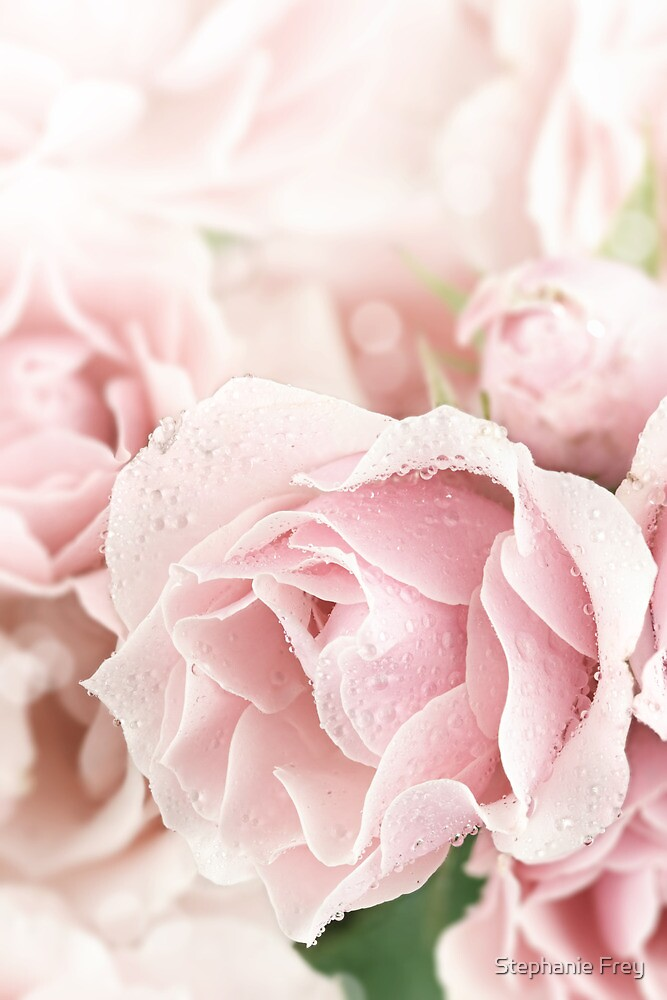 Pastel Pinks by Stephanie Frey