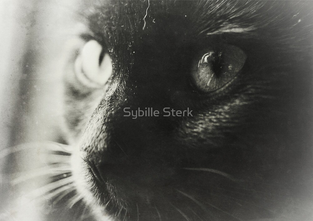 I See You, Too (Ollie) by Sybille Sterk