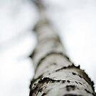 In the woods - Christmas Eve - 6 Jan 2013 - Serbia  by Aleksandar Topalovic