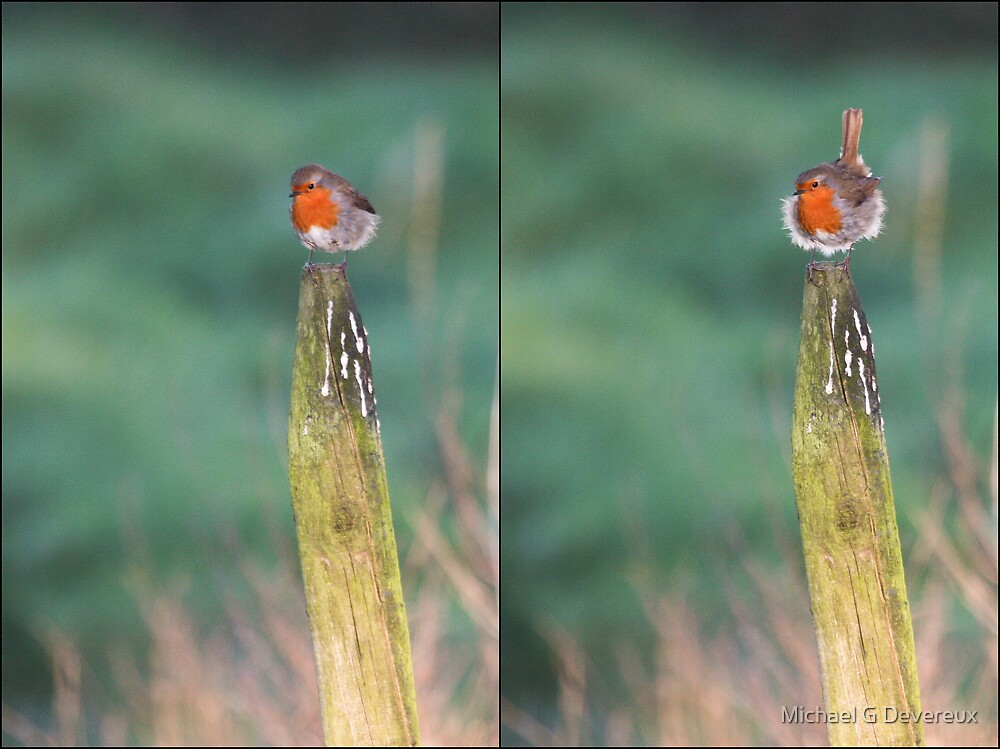 Windswept! by Michael G Devereux