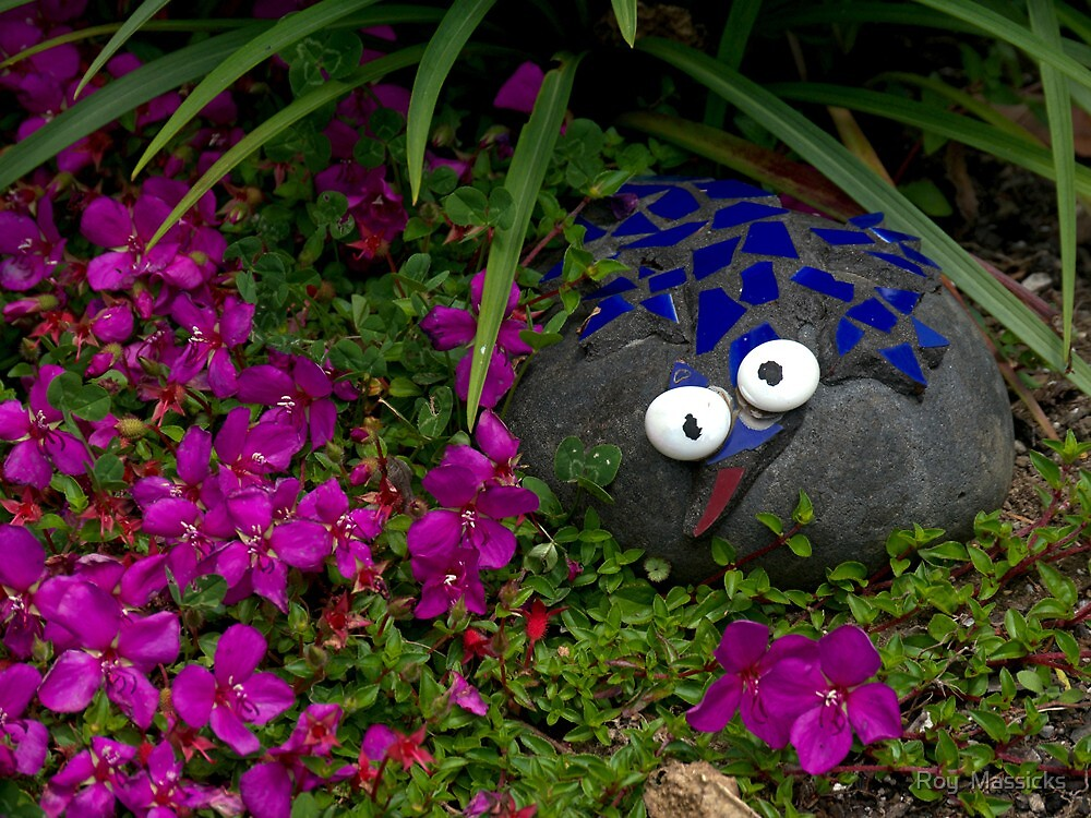My pet rock................! by Roy  Massicks