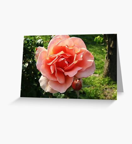Full bloom and bud Greeting Card