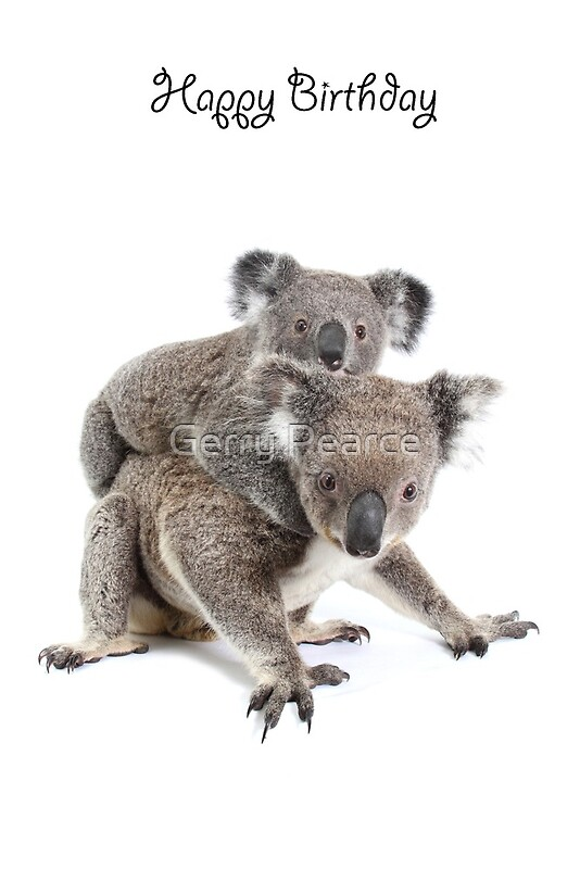 Quot A Koala Happy Birthday 2p Quot Greeting Cards By Gerry Pearce