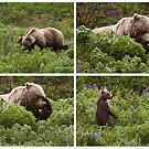 Grizzly Family by Marty Samis