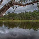 Dunns Swamp by Steve Randall