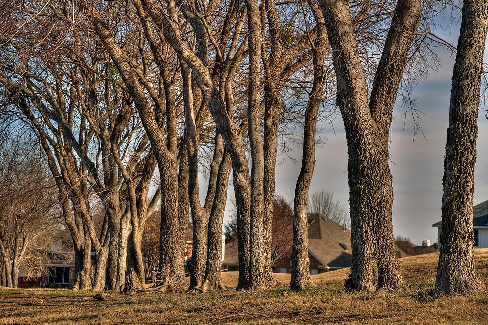 Through the Trees  by John  Kapusta