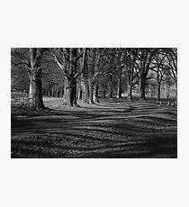 Shadows of Gostwyck Photographic Print