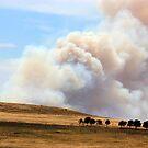 Yarrabin fire 12k's from Cooma NSW  by Kym Bradley