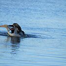 TWO PELICANS by bobby1