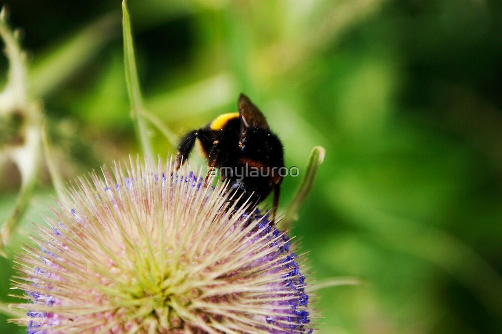 Bumble Bee by amylauroo