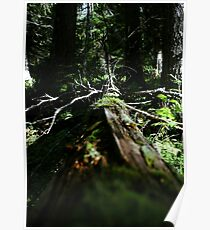 Old Tree Poster