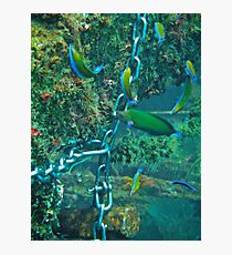 WRASSE REACTION Photographic Print