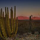 Setting sun over the desert by Penny Rinker