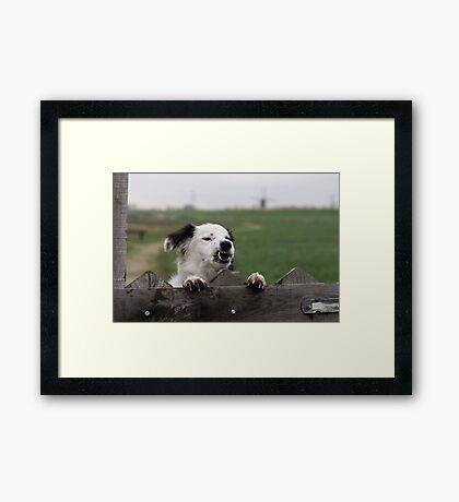 Beware of the dog  Framed Print