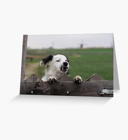 Beware of the dog  Greeting Card
