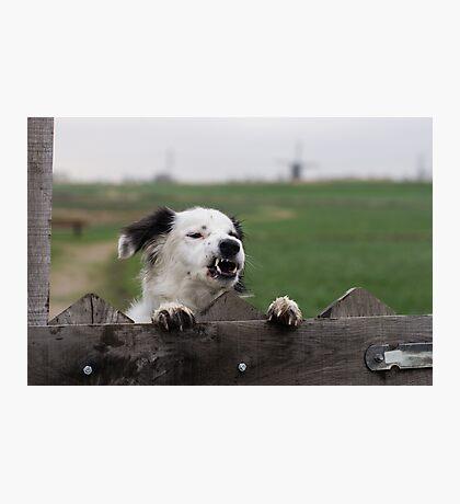 Beware of the dog  Photographic Print