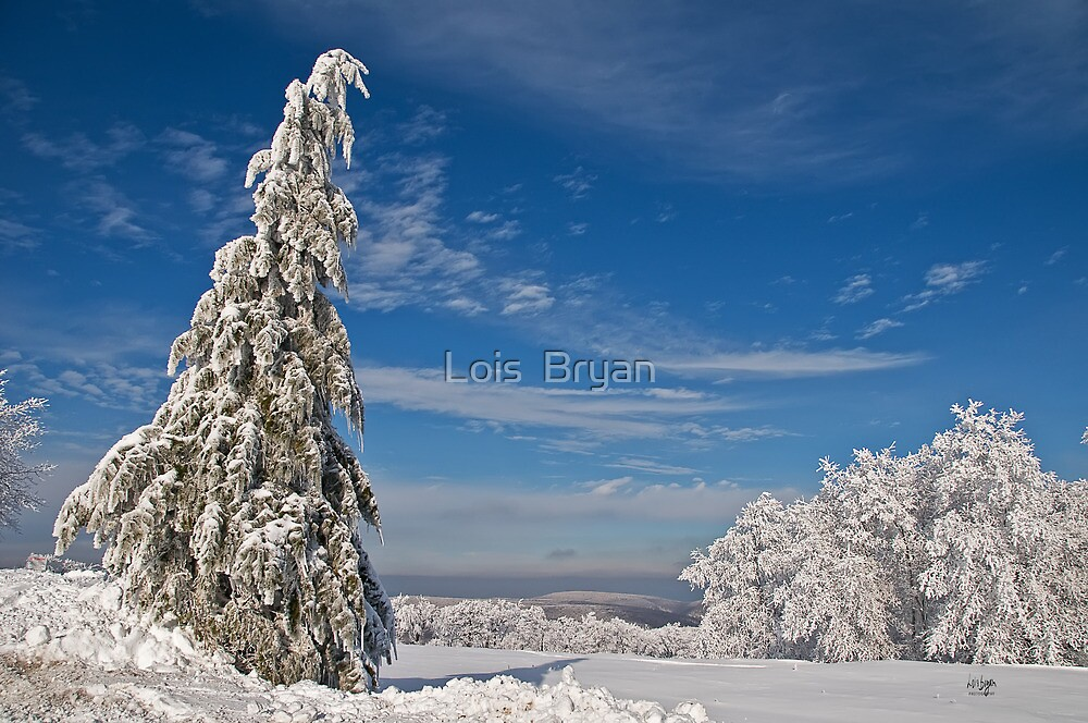 Nothing But Blue Skies by Lois  Bryan