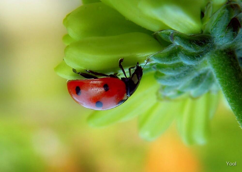 A  Curious Ladybug by Yool