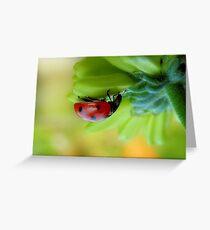 A  Curious Ladybug Greeting Card
