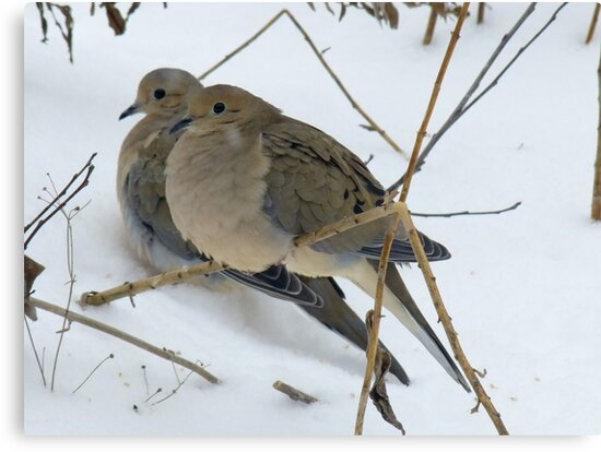 A Pair Of Mourning Doves by Tracy Wazny