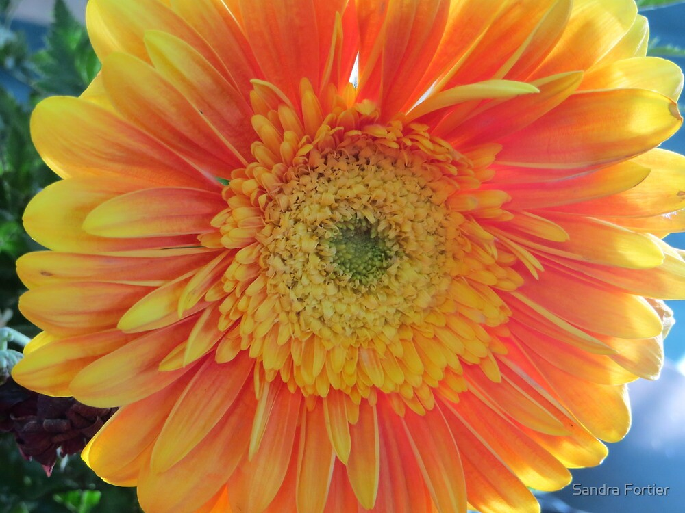 Sun Shining on My Face by Sandra Fortier