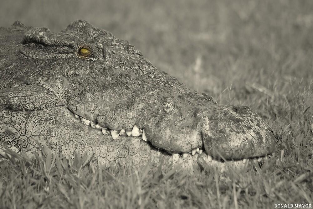 Chobe Croc in black & white by Donald  Mavor