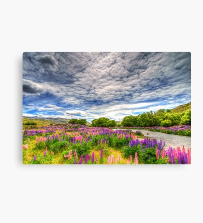 The Wild Lupins of Lindis Pass Canvas Print
