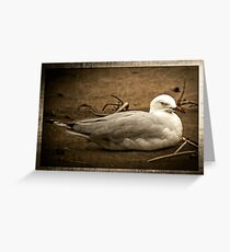 Resting Gull Greeting Card