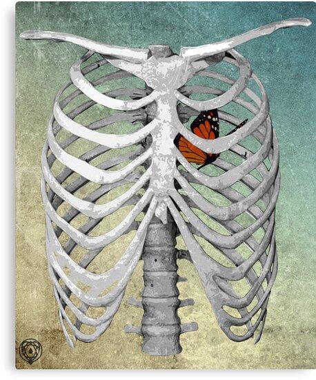 I am empty, I am skin and bones, I'm a ribcage by seamless