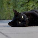black cat by MichaelK