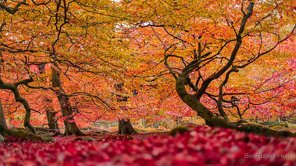 Enchanted forest by BenRobsonHull