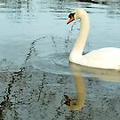 Swan elegance in reflection. by vonniepyn