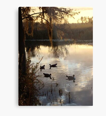 MUSCOVY DRAKES ON ECONFINA CREEK Metal Print