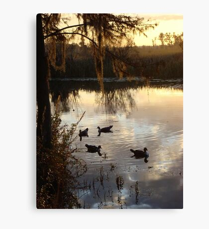 MUSCOVY DRAKES ON ECONFINA CREEK Canvas Print